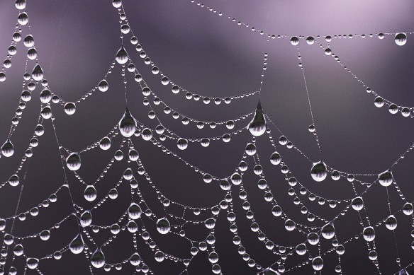 A dew soaked web
