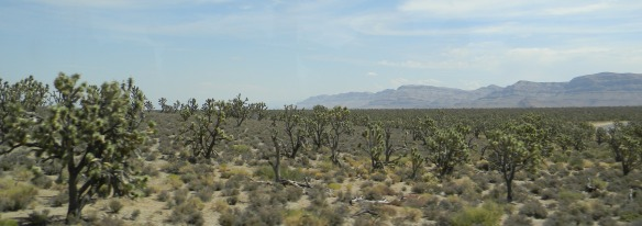 Joshua_tree_forrest_in_Arizona-cropped