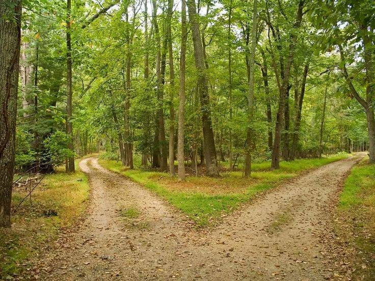 divergent-paths