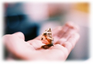 butterfly-in-the-hand02a